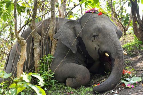 Hindistan Ölen Filler